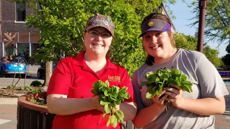 Volunteers picking spinach.jpg