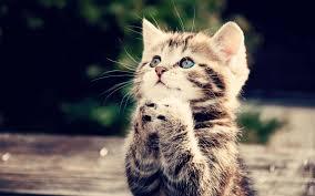 cat pray.jpg