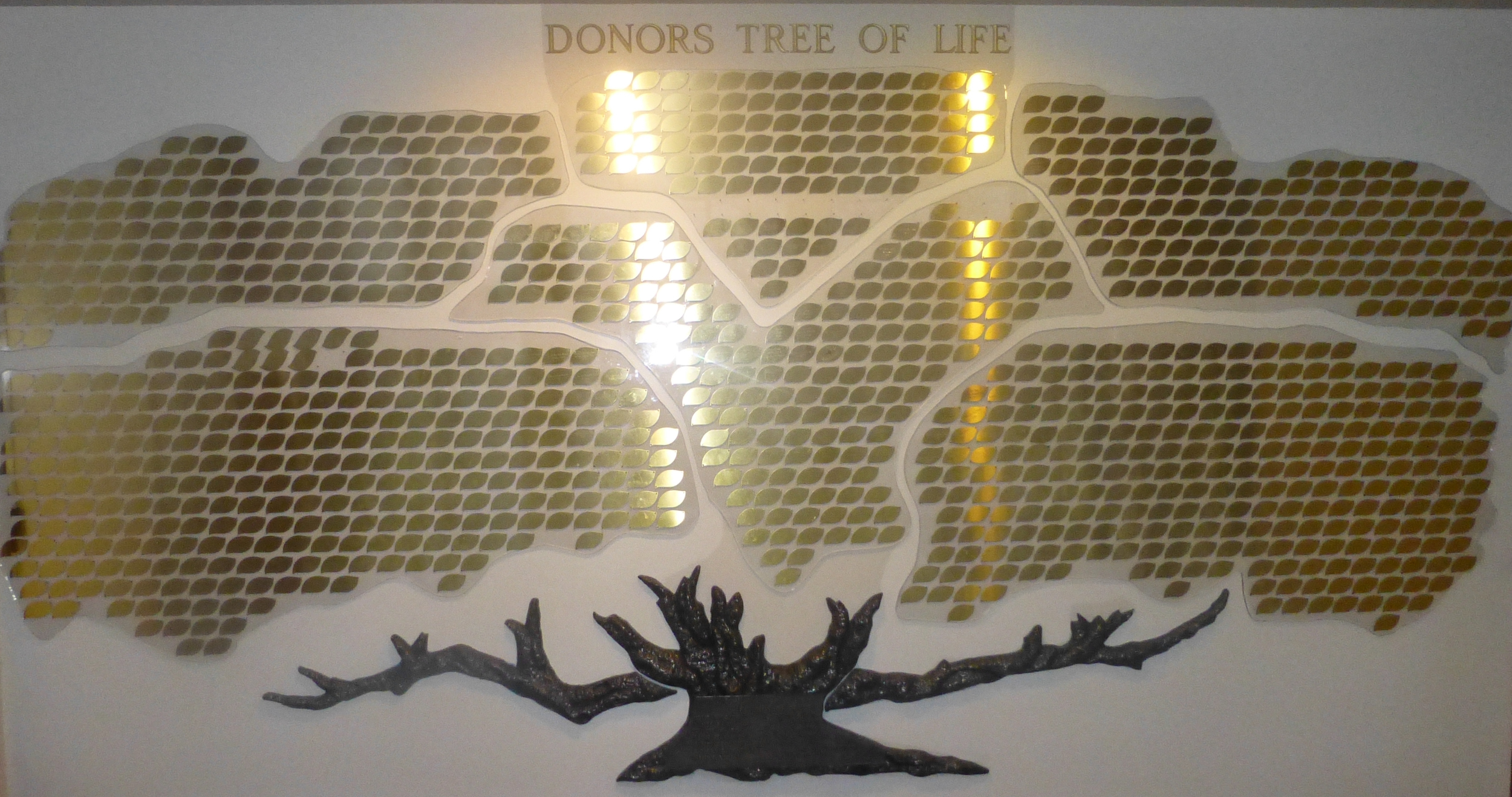 Donors Tree of Life.JPG