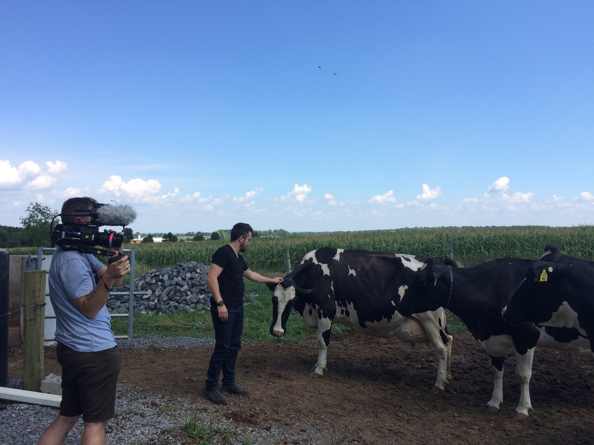 Fabio Viviani petting dairy cows. Most people don't know that Fabio grew up on food stamps in Italy. He came to America in 2005 with no money, and is now one of the most successful celebrity chefs in America. I am proud to call him a friend and client.
