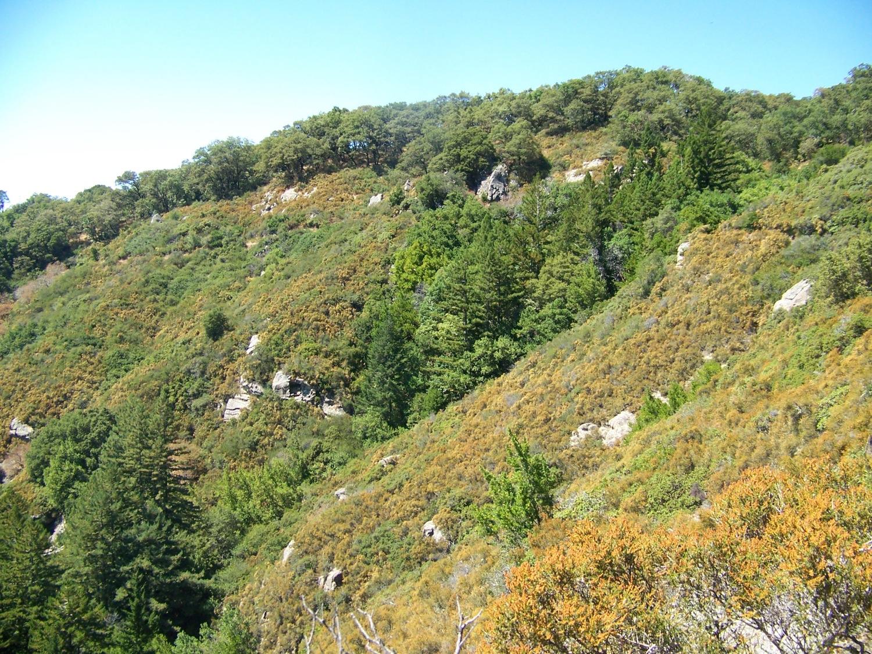 Chaparral in Castle Rock State Park