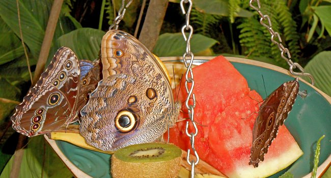 roland-butterfly.jpg