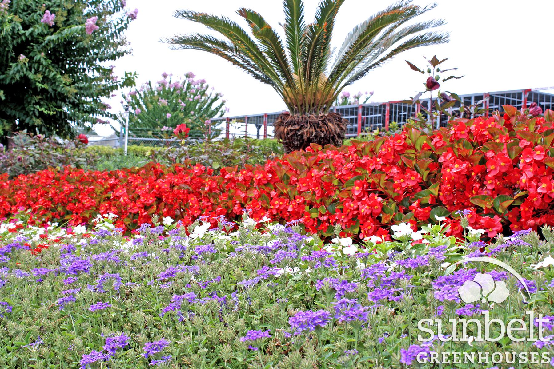 edit-begonia-big--verbena-enduroscape--more.jpg