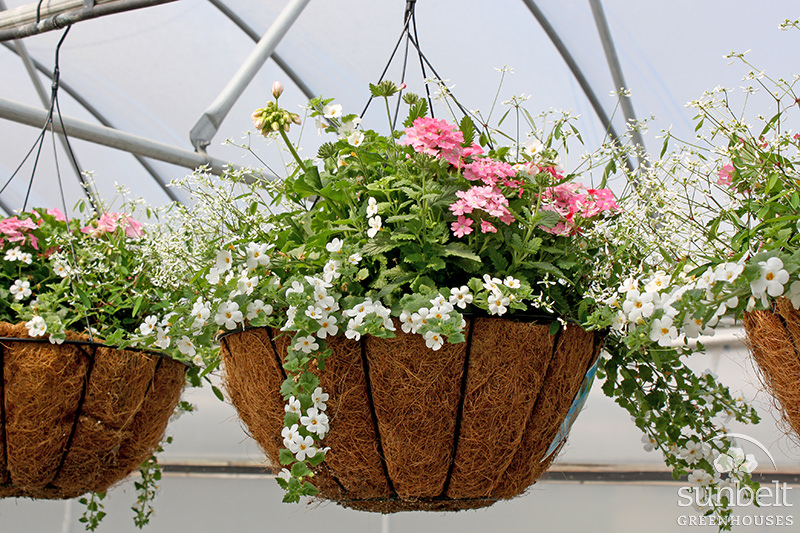 "14"" Coco Hanging Basket"