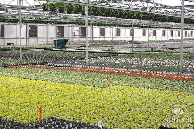Greenhouse 2