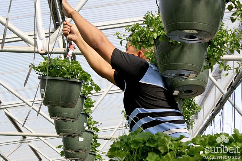Greenhouse 6