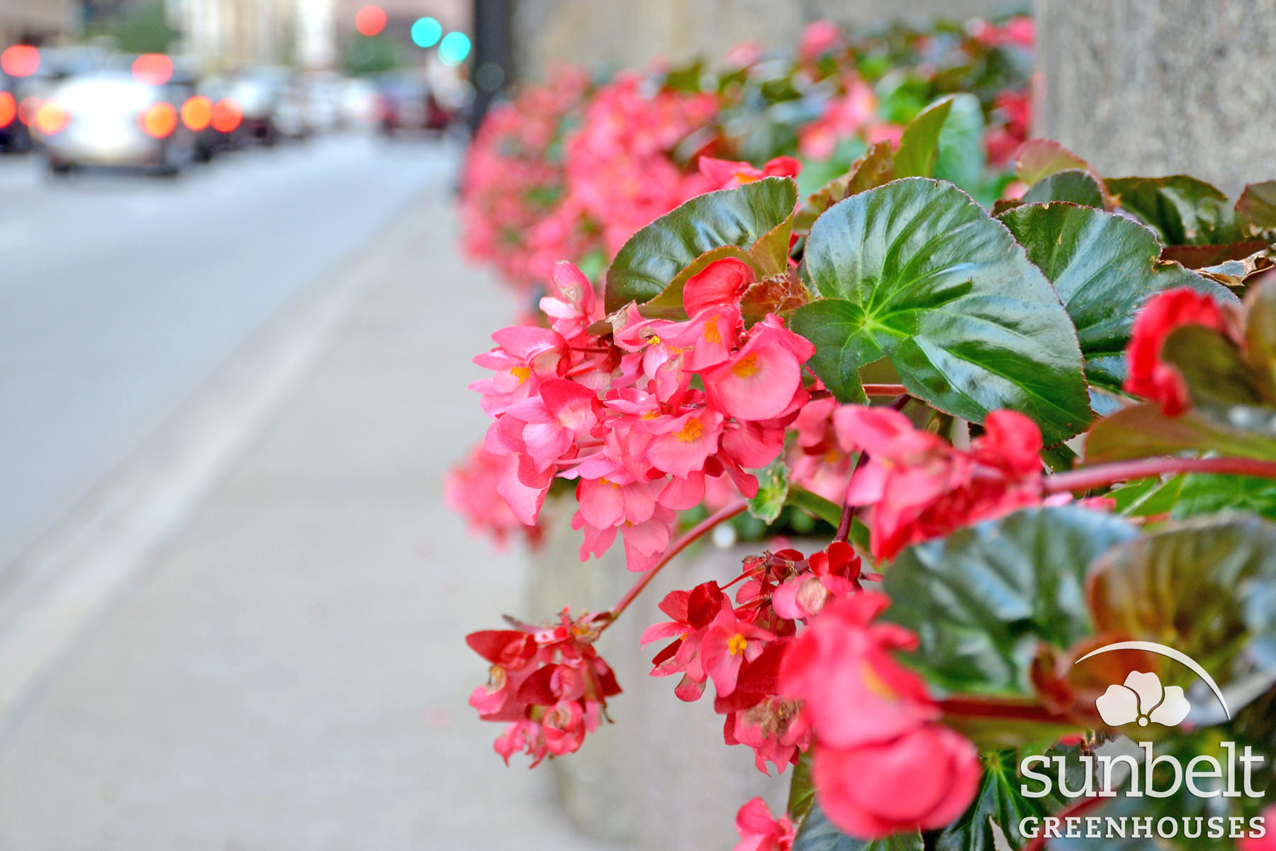 2015-08-19-chicago-landscaping-17.jpg