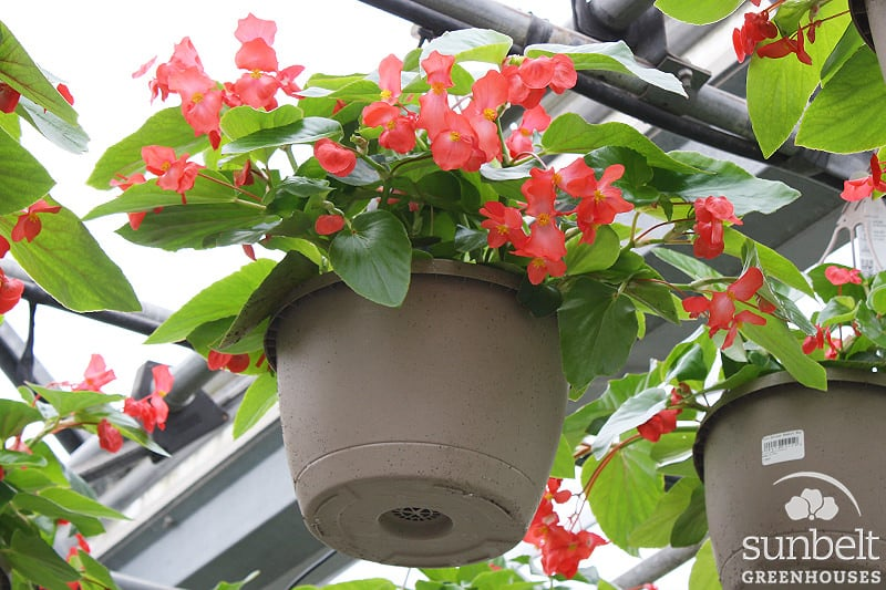 "10"" Hot Buy Hanging Basket"