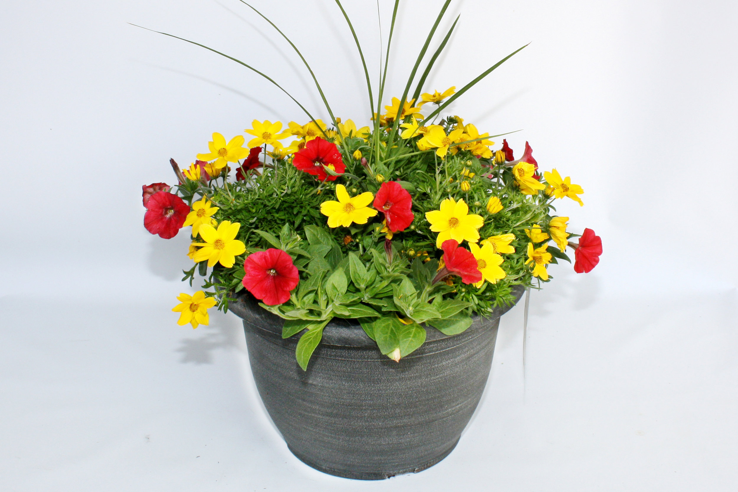 sunbelt-spring-program-planters.jpg