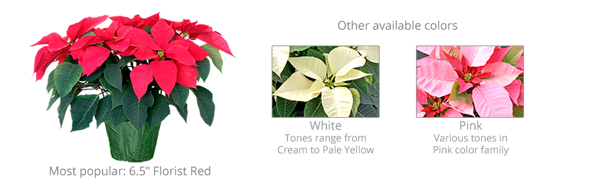 poinsettia-fundraiser-2019-web.png
