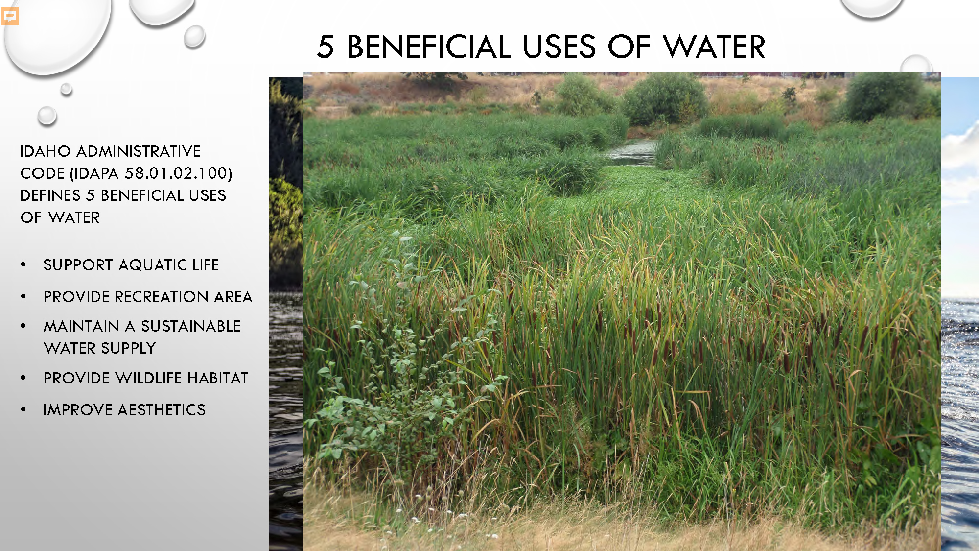 Constructed Wetlands_Page_30.jpg