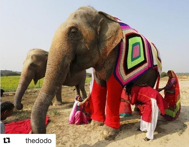 #images4change #Repost @thedodo //A group of local villagers have been knitting giant sweaters to keep these rescue elephants warm during the winter. #elephants #savetheelephants #wildlife (📷: @wildlifesos)