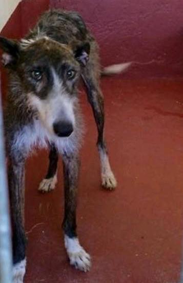 Fernando / Galgos en Familia > Grateful Greyhounds