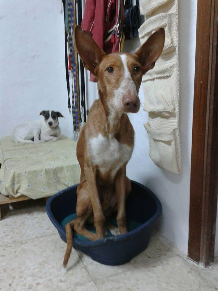 Paddy / A.I.R.E. > Grateful Greyhoundds