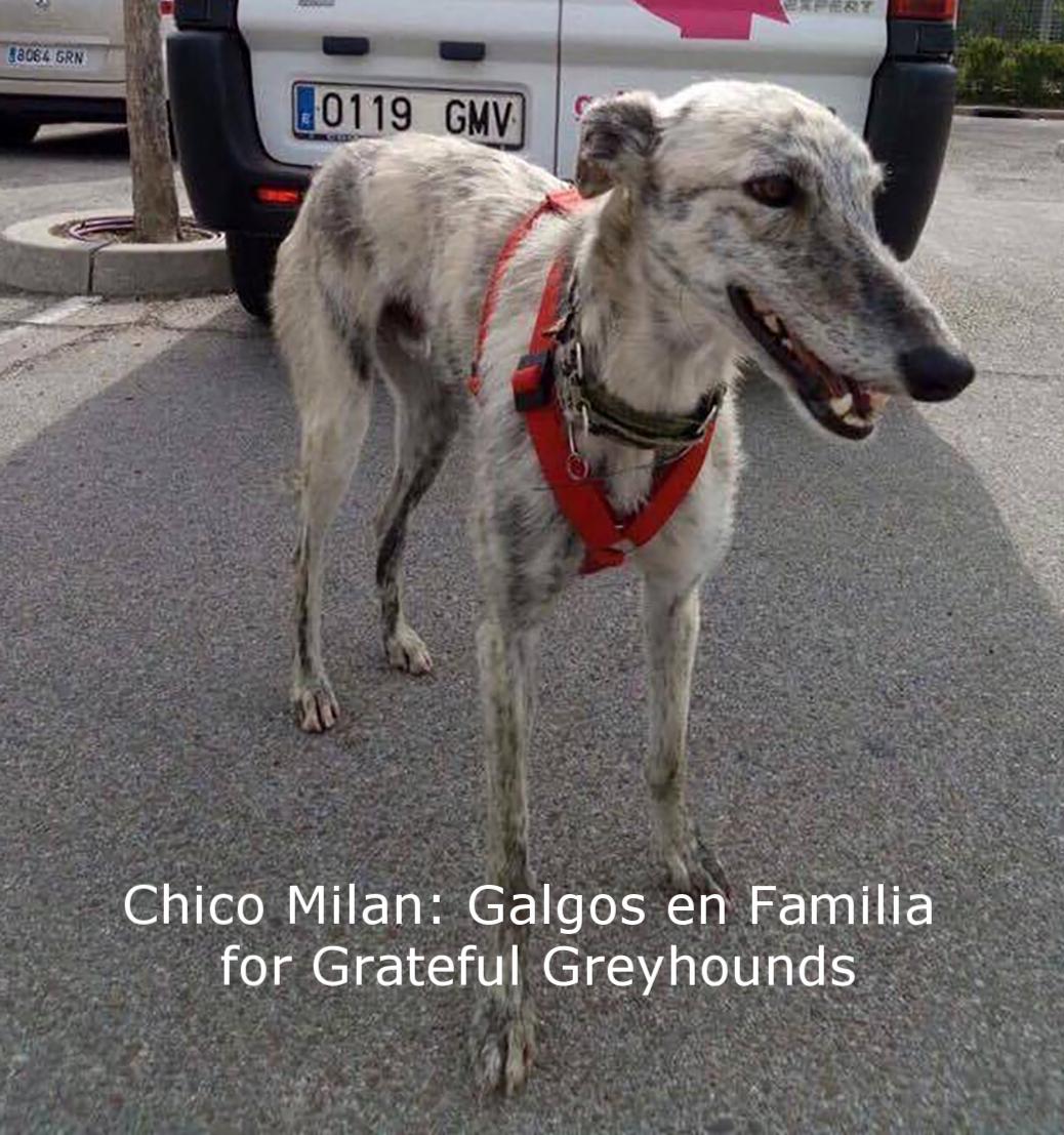 Chico Milan2.jpg