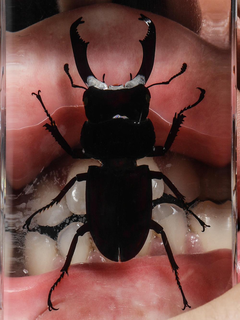 Beetle_3.jpg