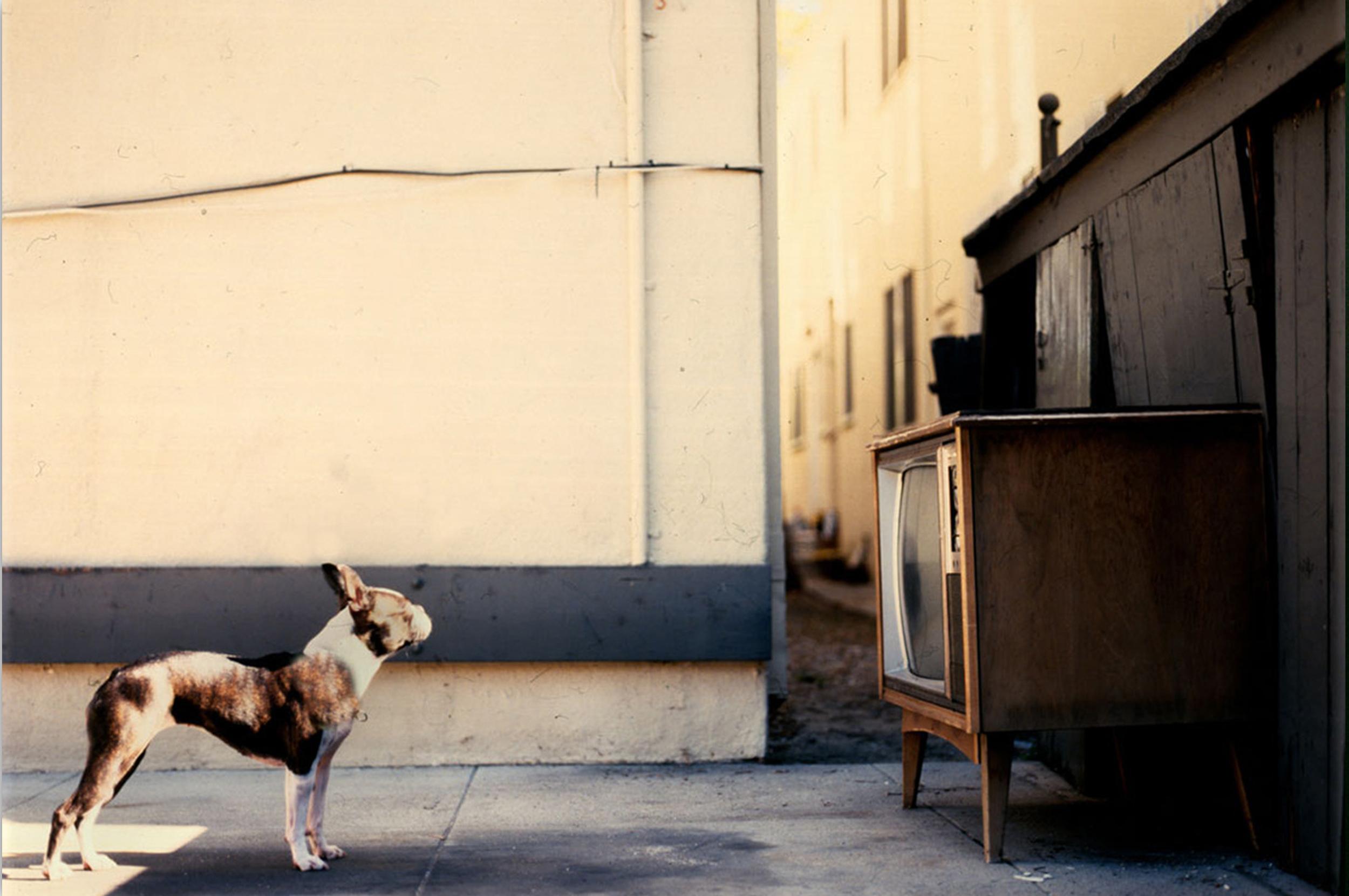WebsiteMockup_Dogpic.jpg