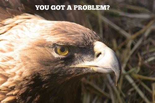 bird angry.jpg
