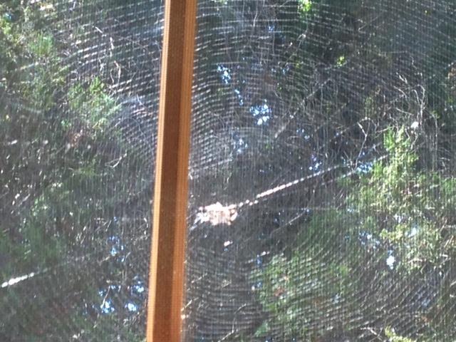 spider center web3.jpg