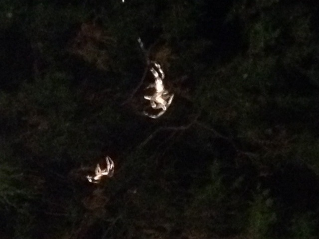 spiders on trapeze.jpg