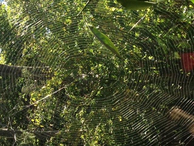 web in daylight.jpg