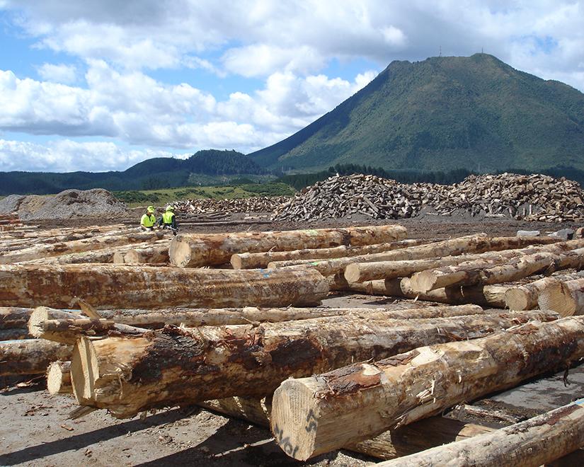 Pinetech-Pacific-Log-Studies.jpg