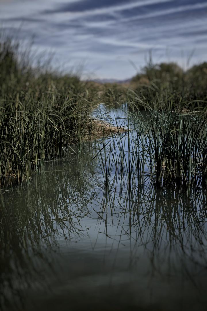 vegas.wetlands.jpg