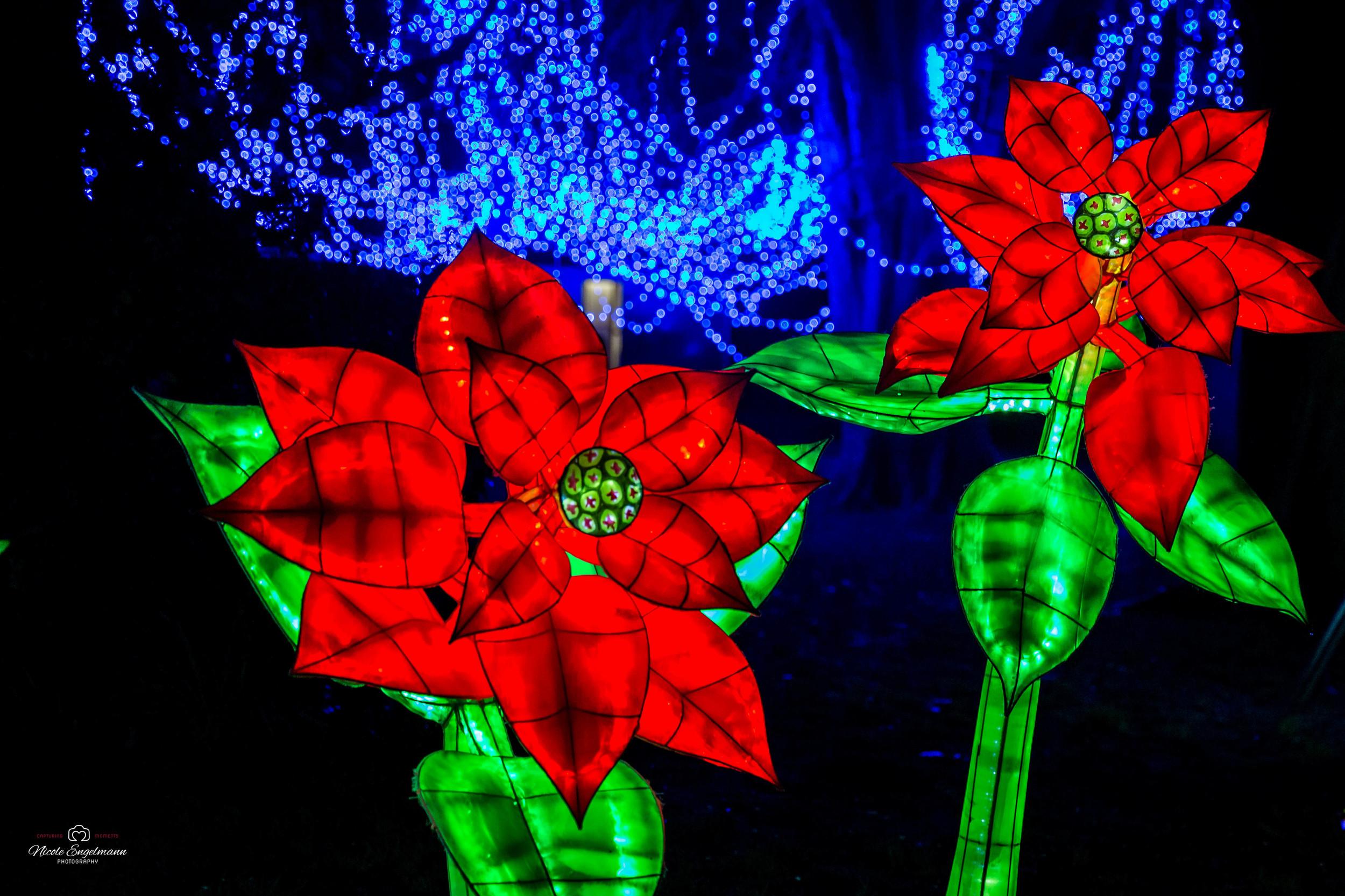 lantern-festival-18.jpg