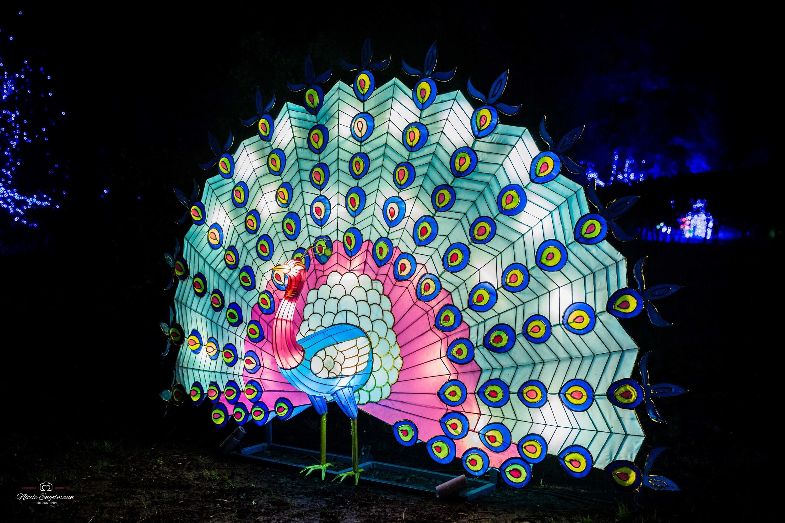 lantern-festival-19.jpg