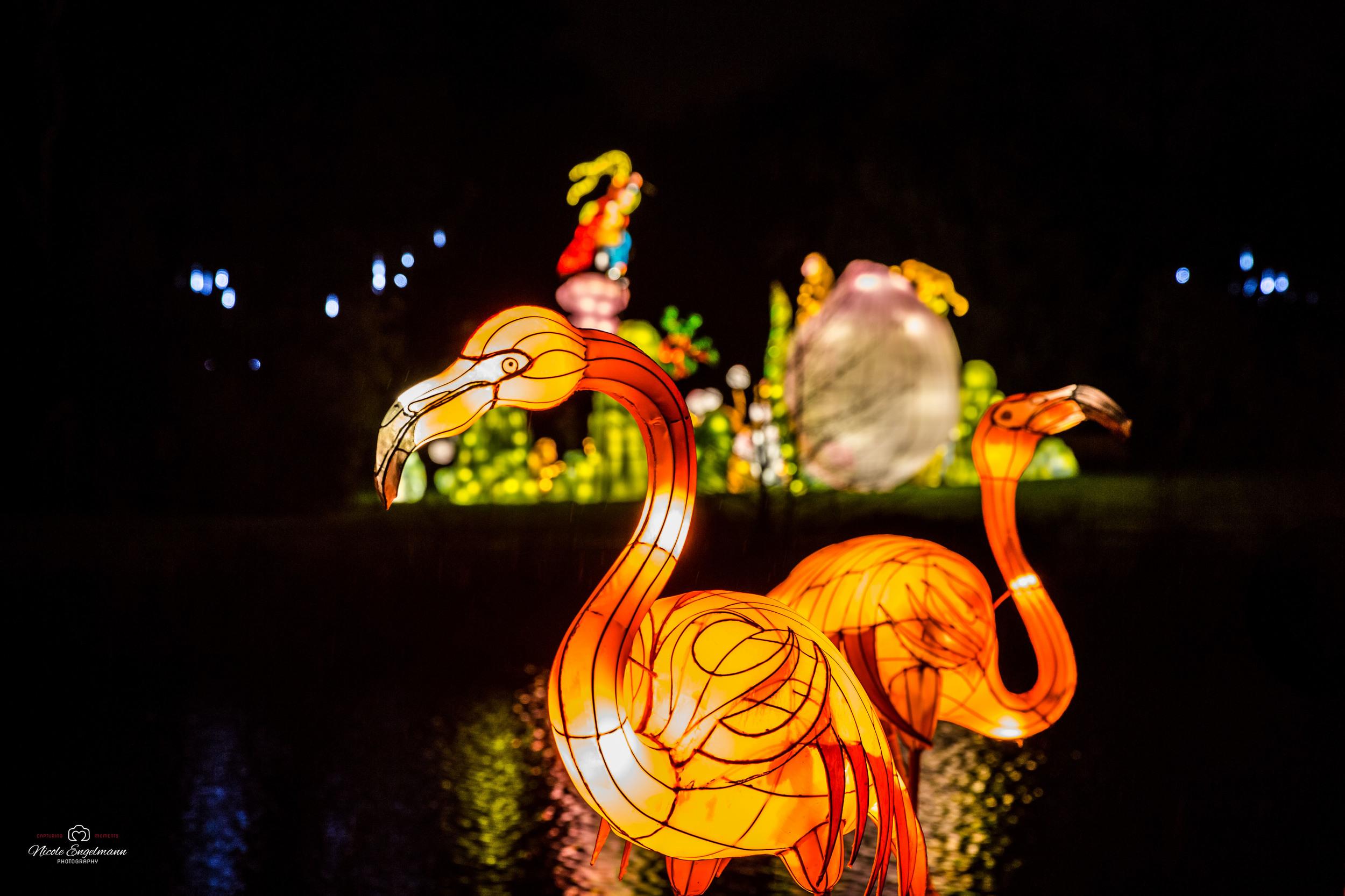 lantern-festival-23.jpg