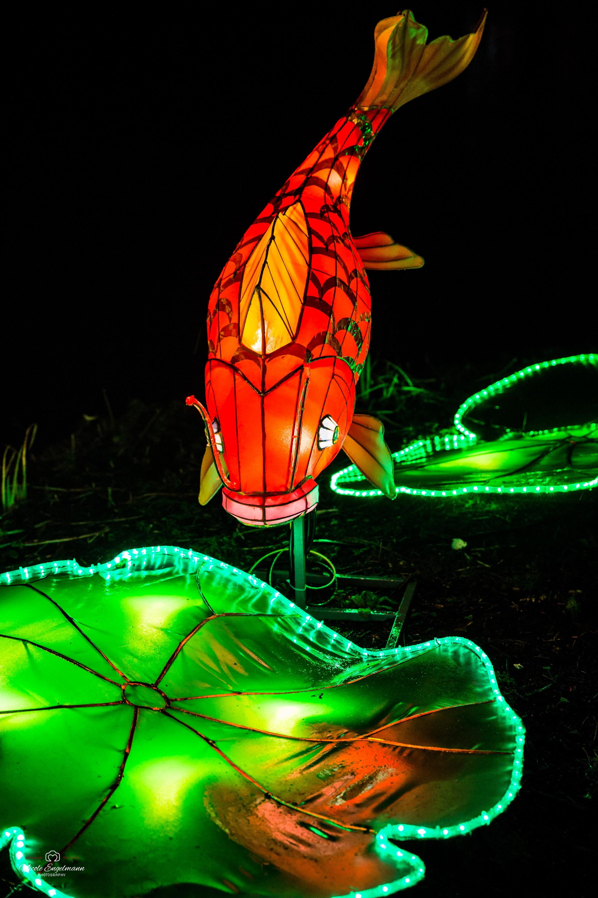 lantern-festival-26.jpg