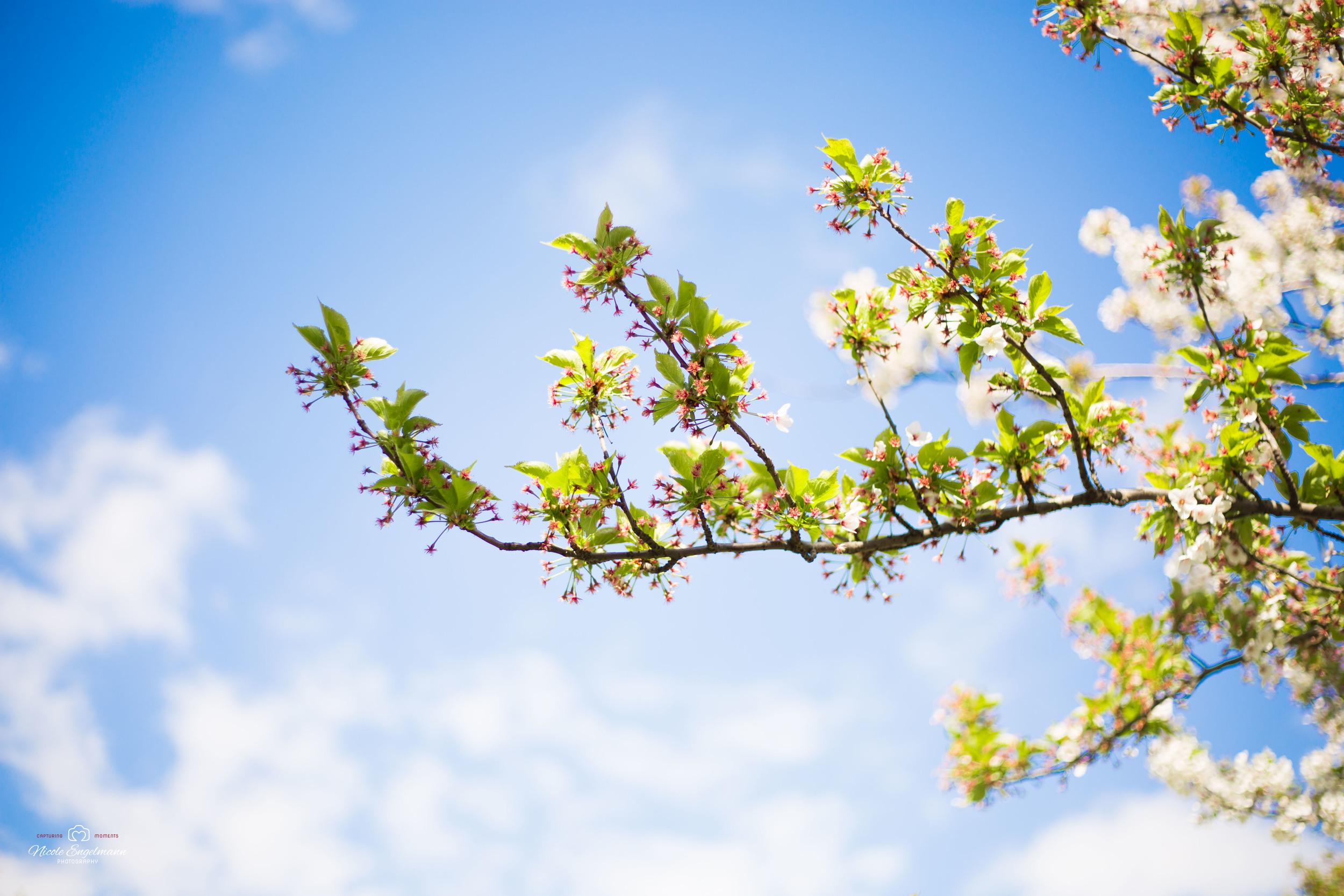 Spring Flowers-5.jpg