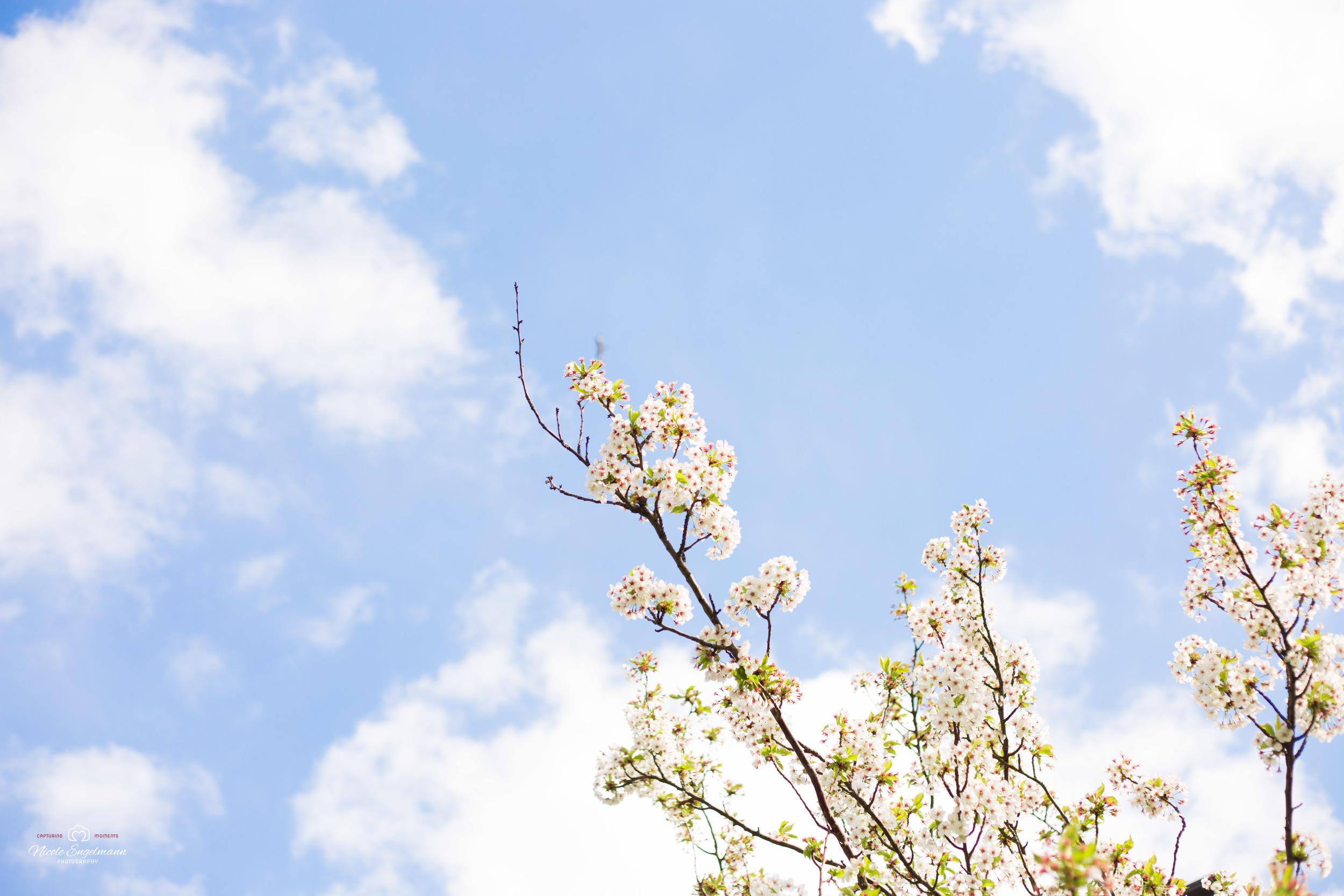 Spring Flowers-9.jpg