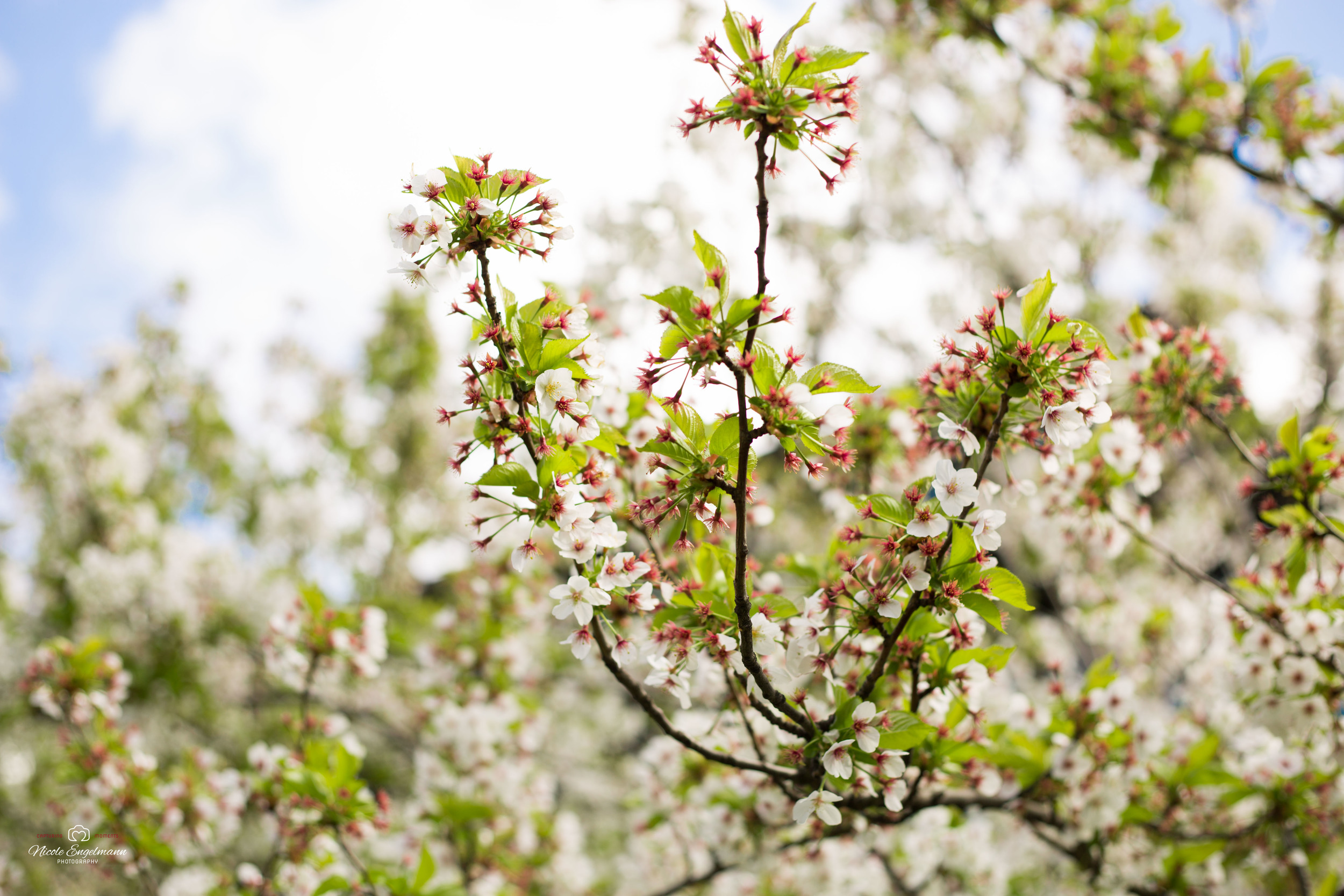 Spring Flowers-10.jpg