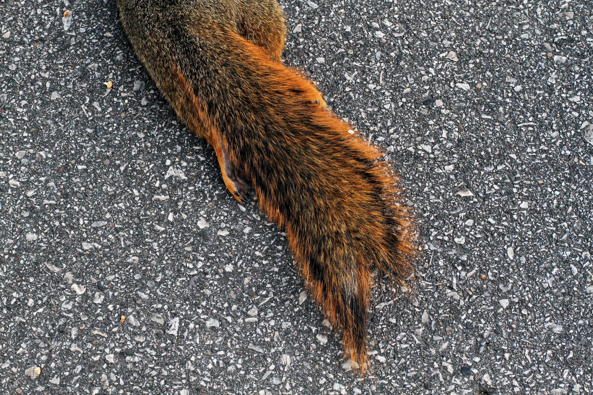 7squirrel.jpg