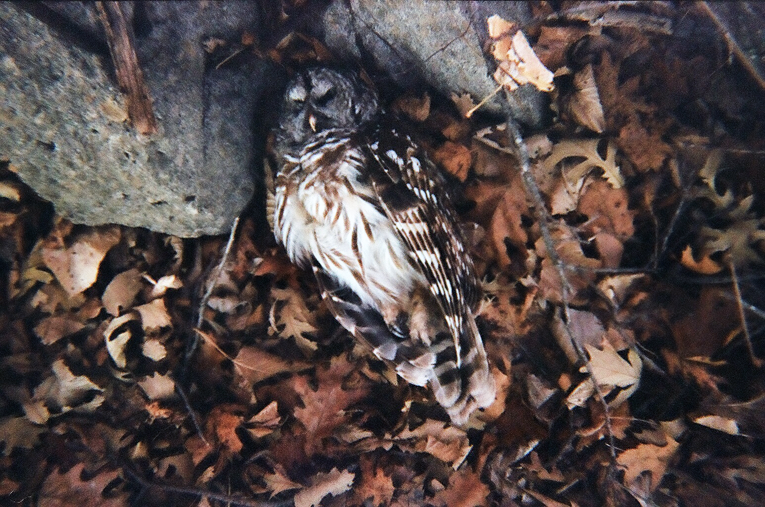 Owl_Film.jpg