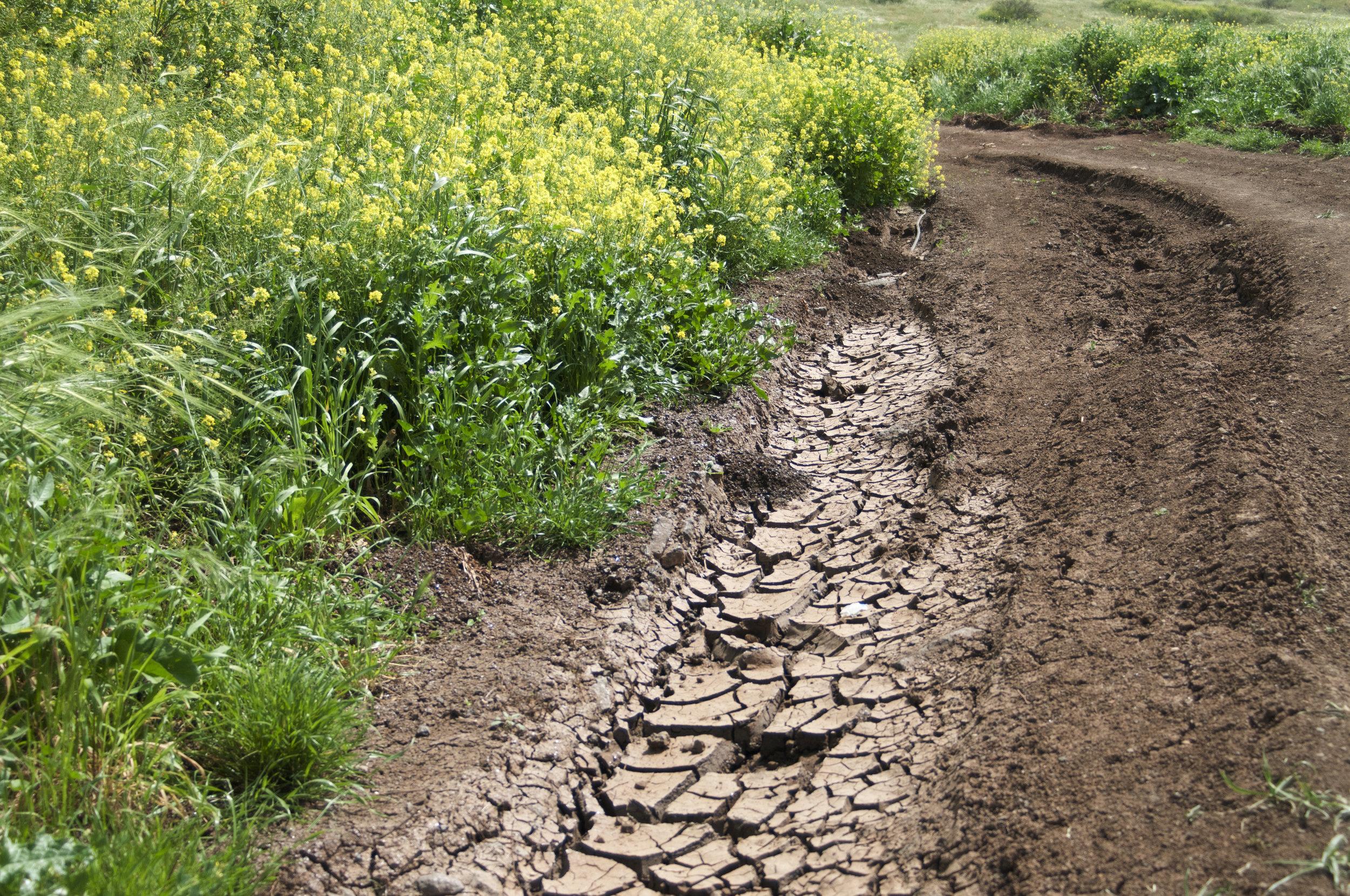 Path, Yavniel, March 2013