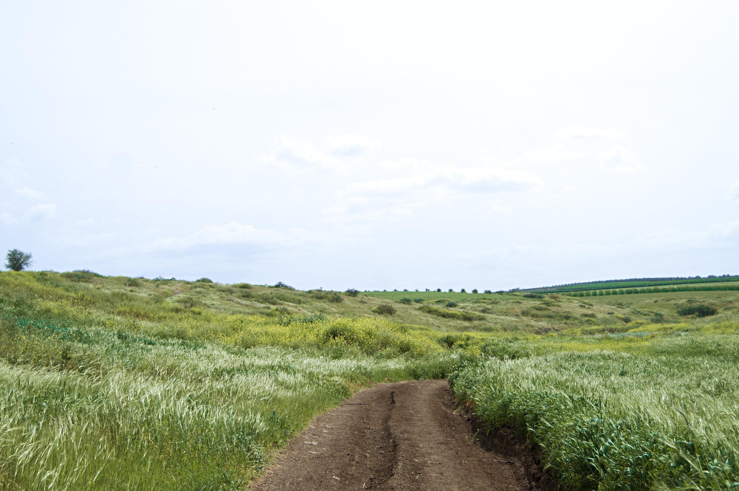 Trail, Yavniel, March 2013
