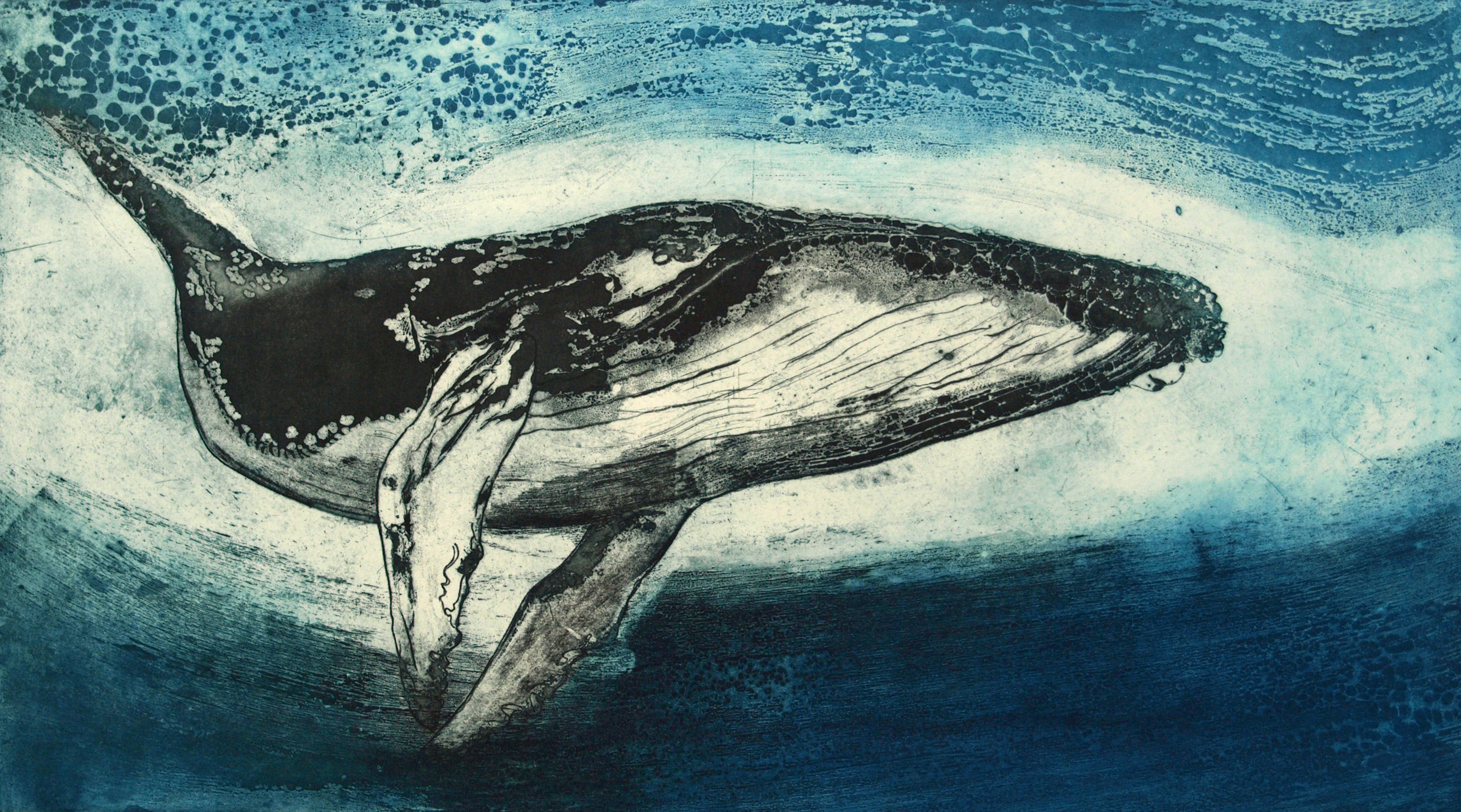 Humpback Whale IV   Etching 90 x 56cm  Sold Out