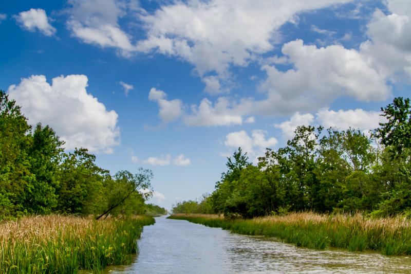 1803 MSY swamp-11.jpg