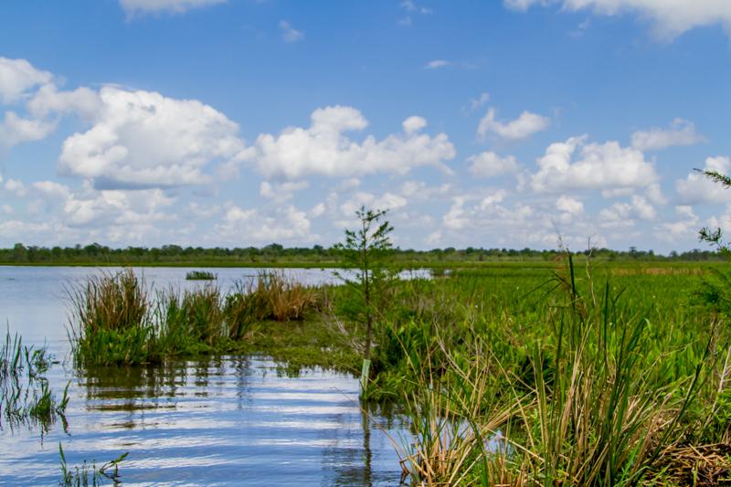 1803 MSY swamp-15.jpg