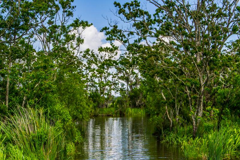 1803 MSY swamp-64.jpg