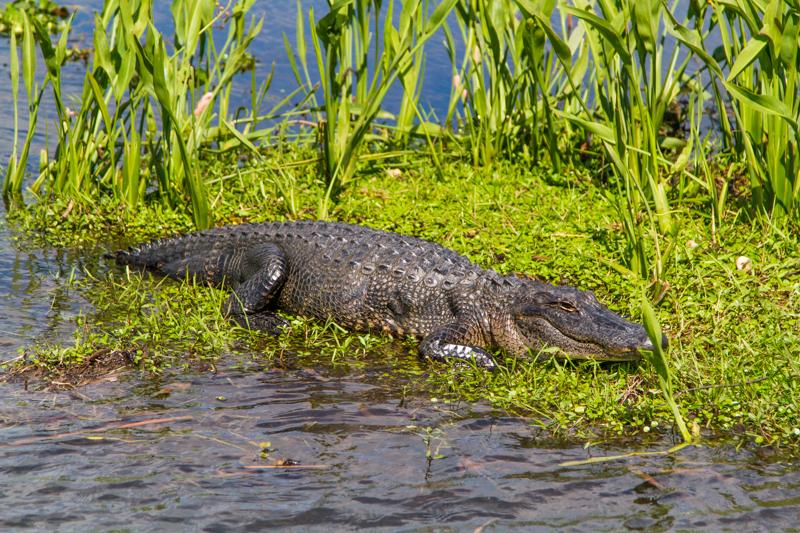 1803 MSY swamp-46.jpg