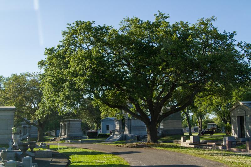 1803 MSY cemetery-25.jpg
