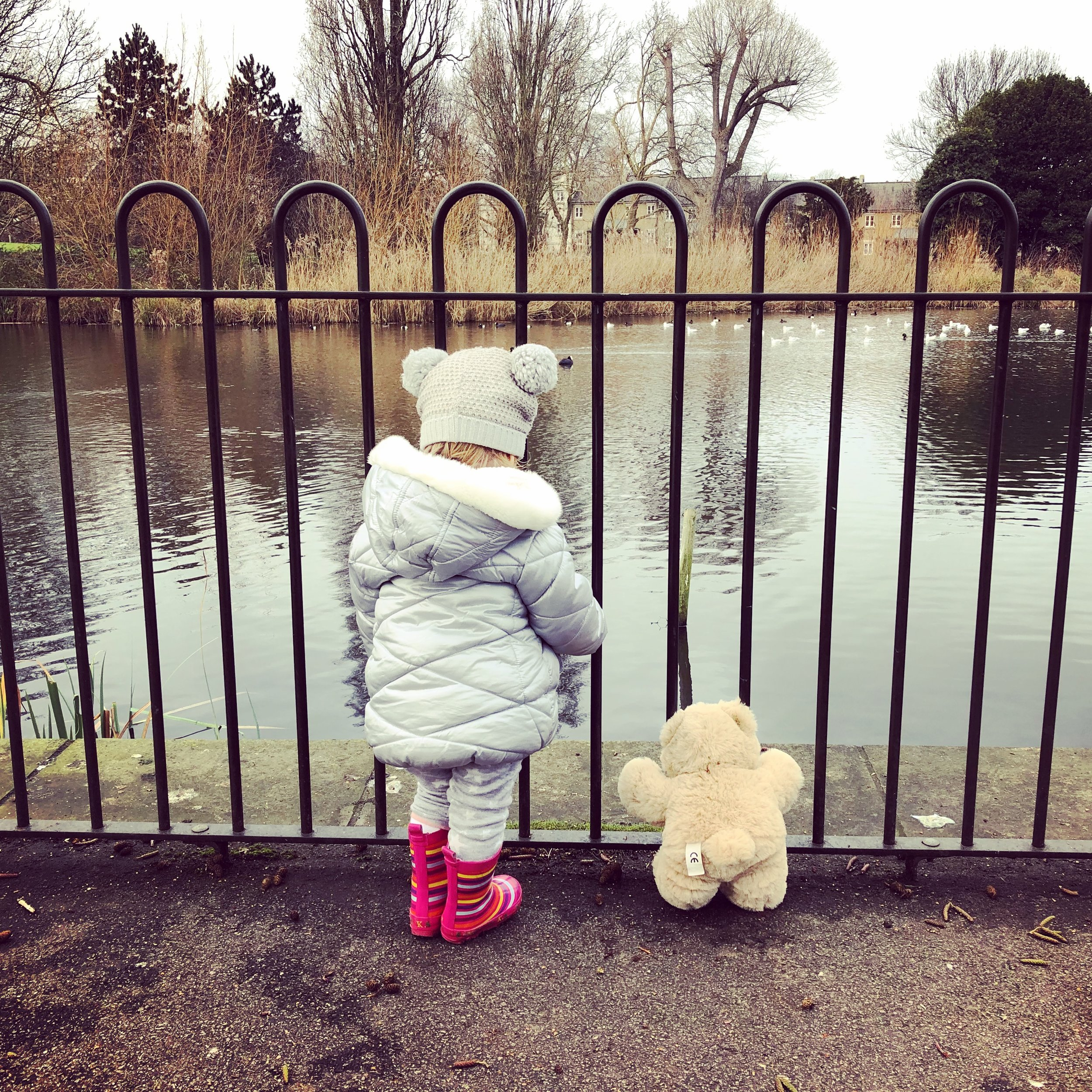 Contemplating feeding Rupert to the ducks