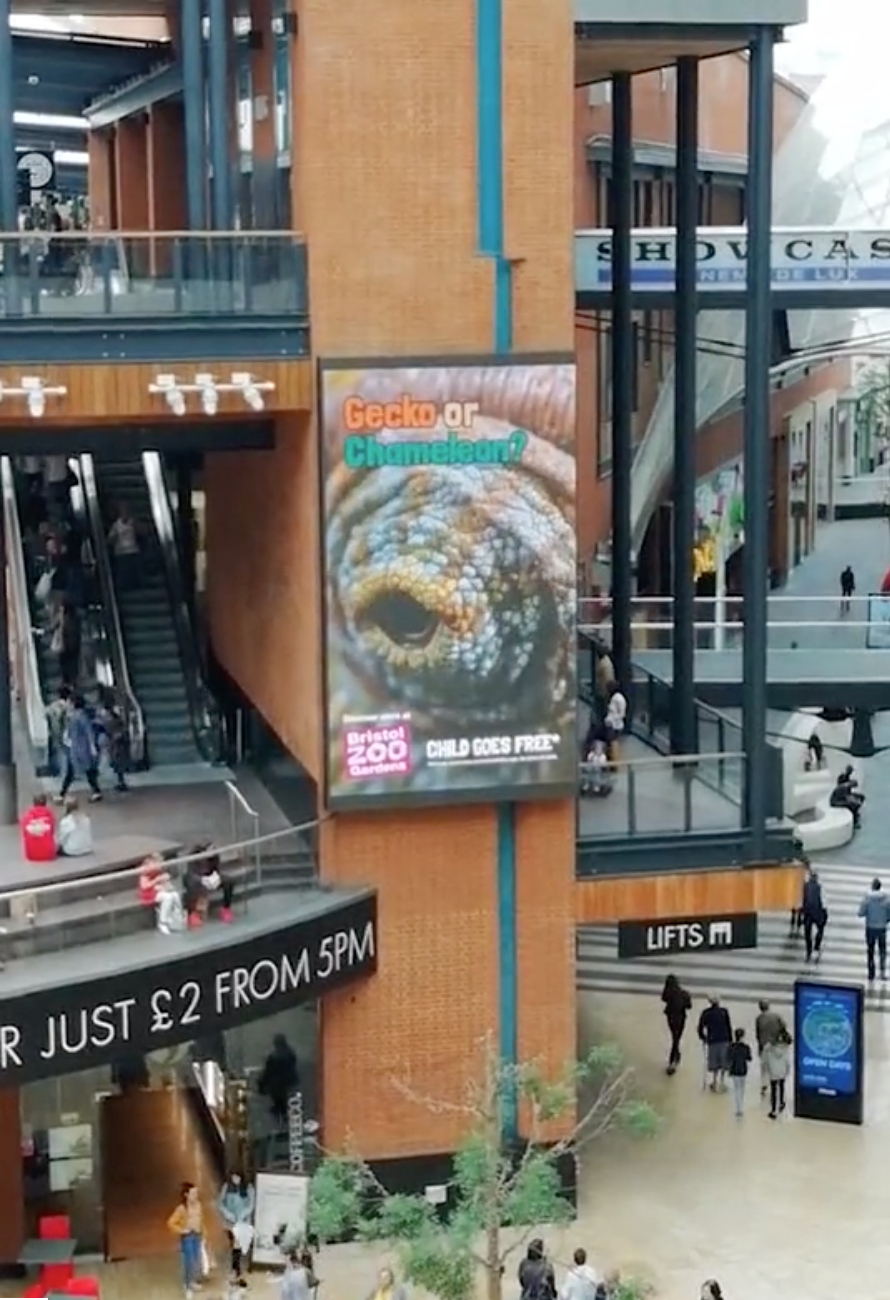 In Action - The Bristol Zoo Gecko in action on a giant digital OOH screen in the Bristol shopping mall.