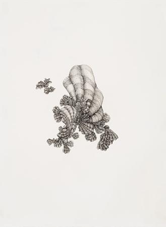 "Julia Fernandez-Pol  ""Mollusk,"" 2009  ink on paper  30 1/4"" x 24 1/4"""