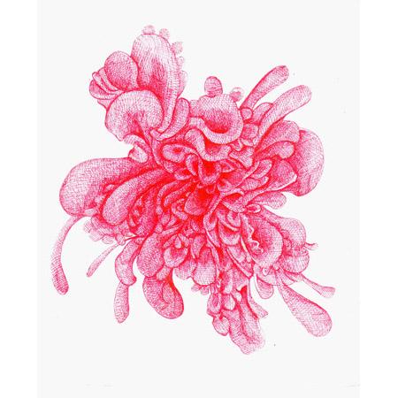 "Julia Fernandez-Pol  ""Chrysanthemum,"" 2009  ink on paper  11 3/4"" x 11"""