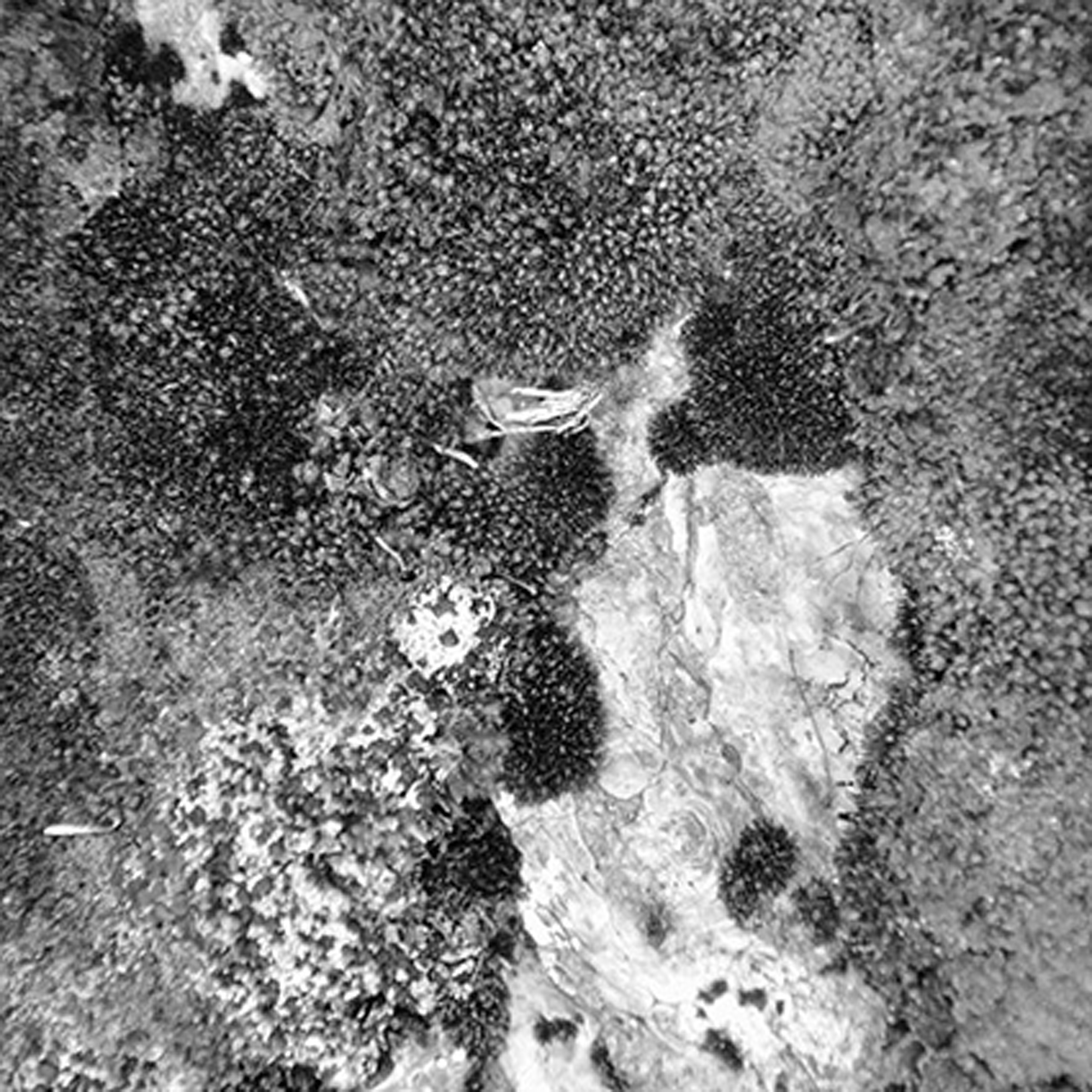 "Blanca Botero  (BIO)   ""Acuafactoría 3,"" 2014  black and white photography 2/4  21 5/8"" x 21 5/8"""