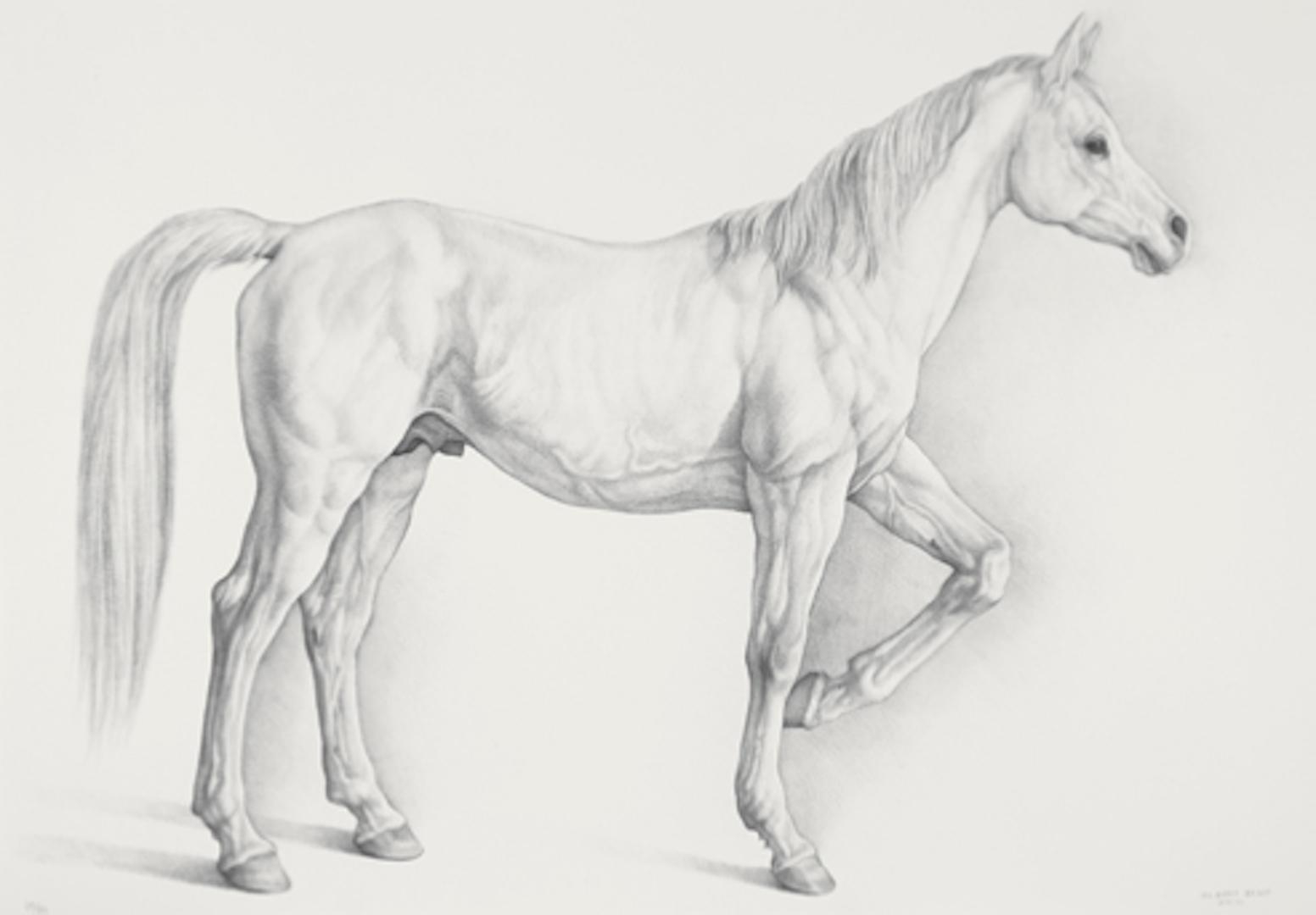 """Cladio Bravo, """"Caballo blanco"""" (White Horse),"""" 2008 lithograph 1/51  31 3/4"""" x 44 1/16"""""""